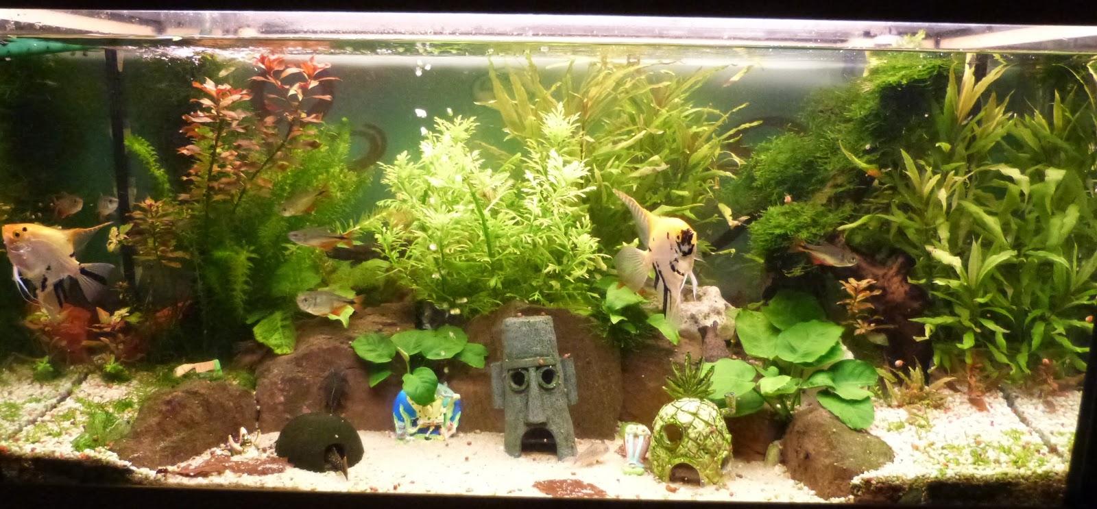 Knuts garnelenblog knut stellt sich vor for Skalar aquarium