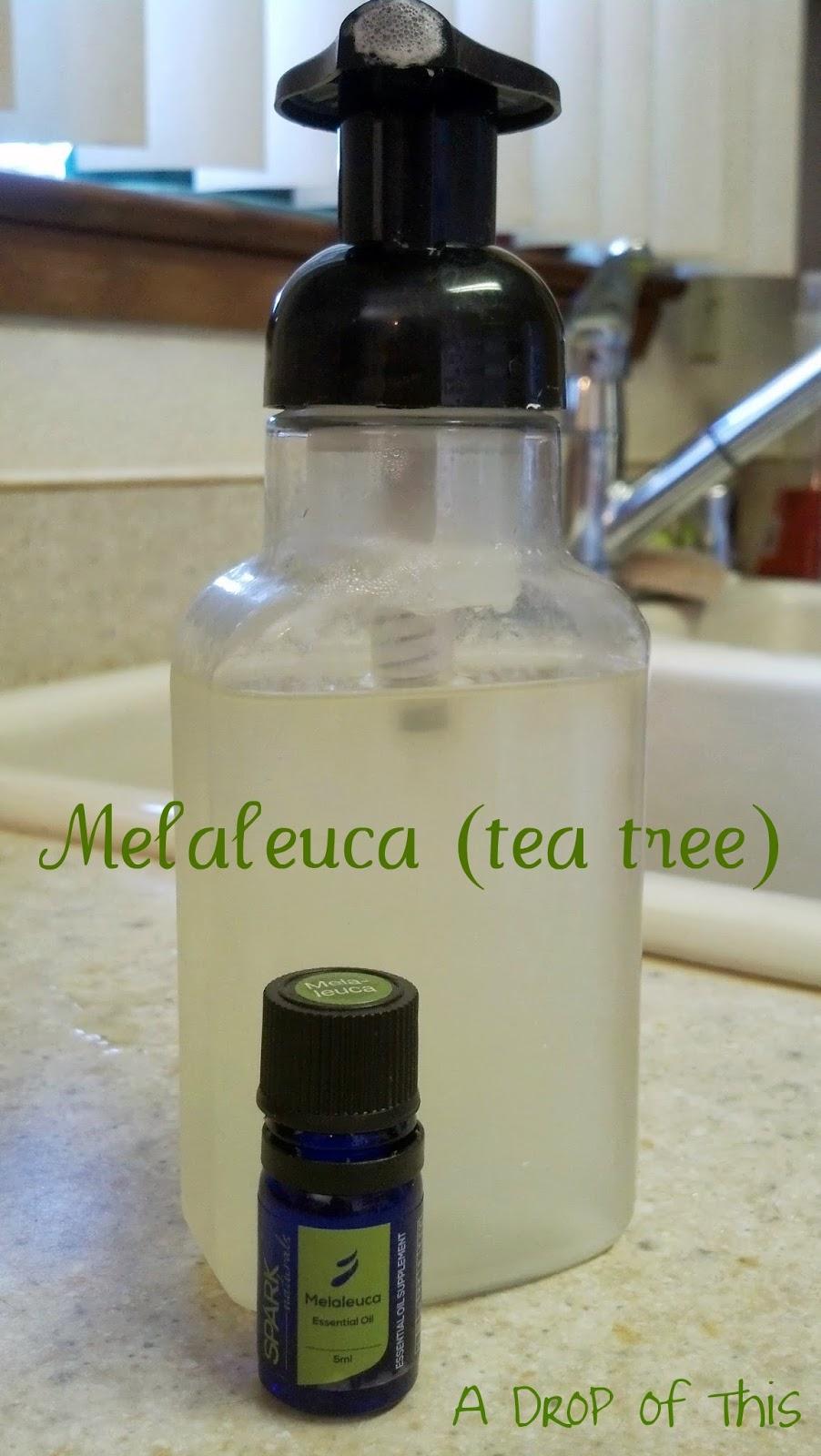 A Drop Of This Magical Melaleuca Tea Tree