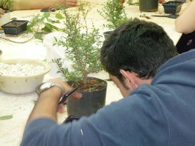 Αθήνα: WORKSHOP: Η Τέχνη των Bonsai - ΝΕΑ ΑΚΡΟΠΟΛΗ