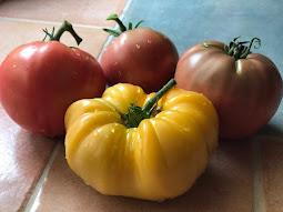 Tomato Harvest time!