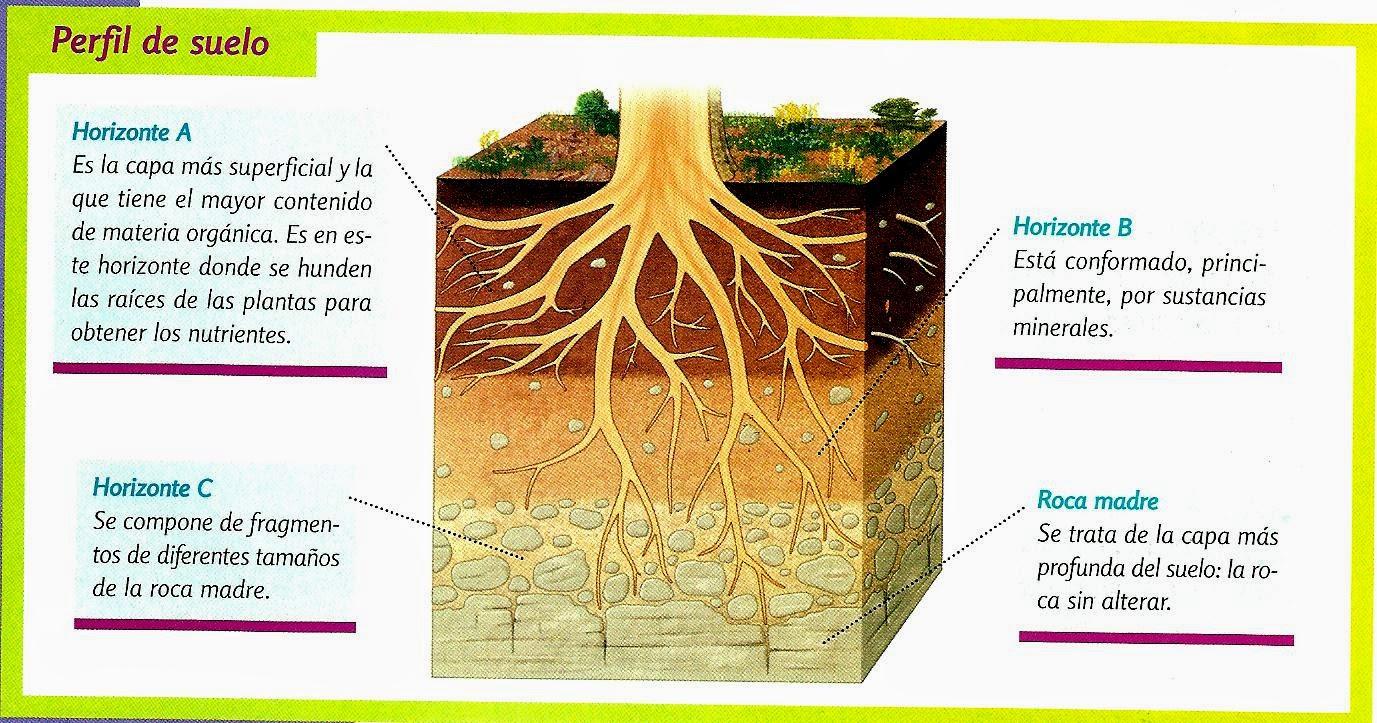 Agropecuarias septimos imagenes de suelos horizontes y for El suelo y sus capas
