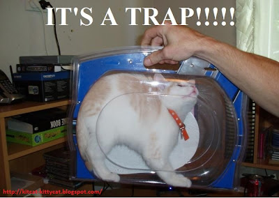 funny trapped cat