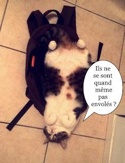 Mélusine, chatte de l'école du chat libre de Toulouse