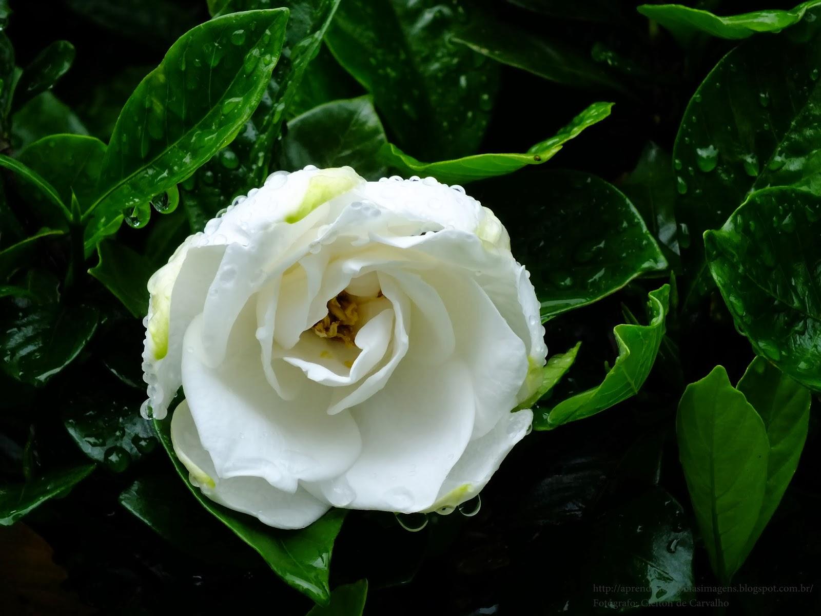 http://aprendendocomasimagens.blogspot.com/2013/12/a-vida-em-seu-ciclo-em-pedido-de-paz.html - A Natureza em um sngelo momento, deixa um pedido de Paz através de uma Formosura... Com a cor da Paz e o ciclo da Vida, ela deixa um recado... Que nesse próximo ano, seja como essa Lindeza... Simples, Humilde, Serena,... Que possamos aprender cada vez mais com a simplicidade e o Amor. Que 2014 Venha ser um ano florido, colorido, simplório...