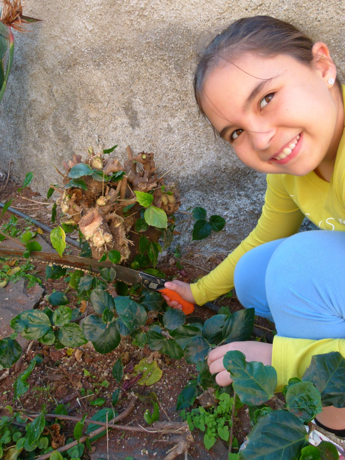 Ishi kasai hongos en mi jard n for Hongos en el jardin