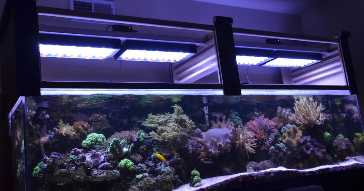 lighting in an aquarium pondquip blog. Black Bedroom Furniture Sets. Home Design Ideas