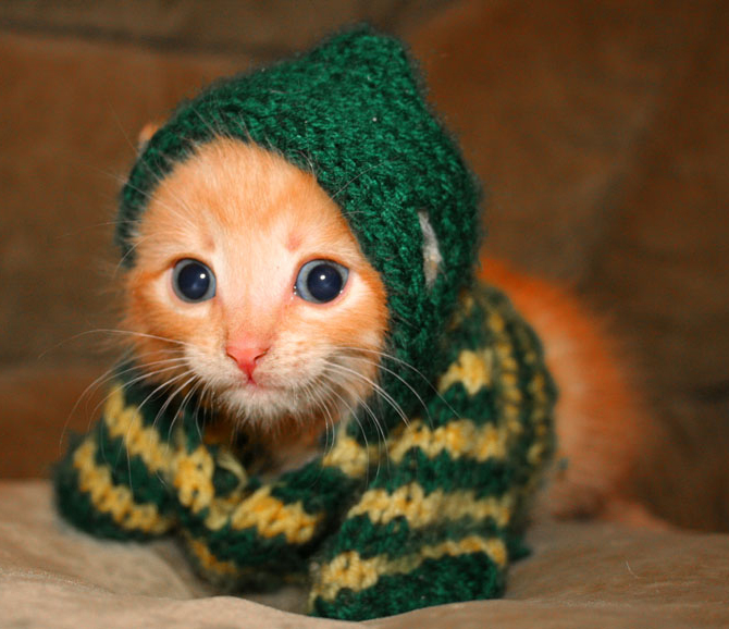 Picture of a cute cat in a knitted sweater