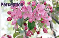 Мой блог , handicraft