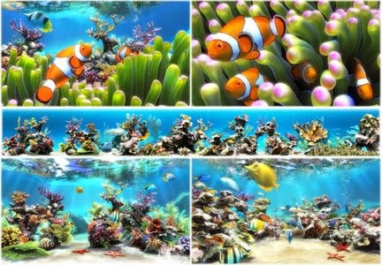 Sim Aquarium v3.6 Build 54 Premium portable