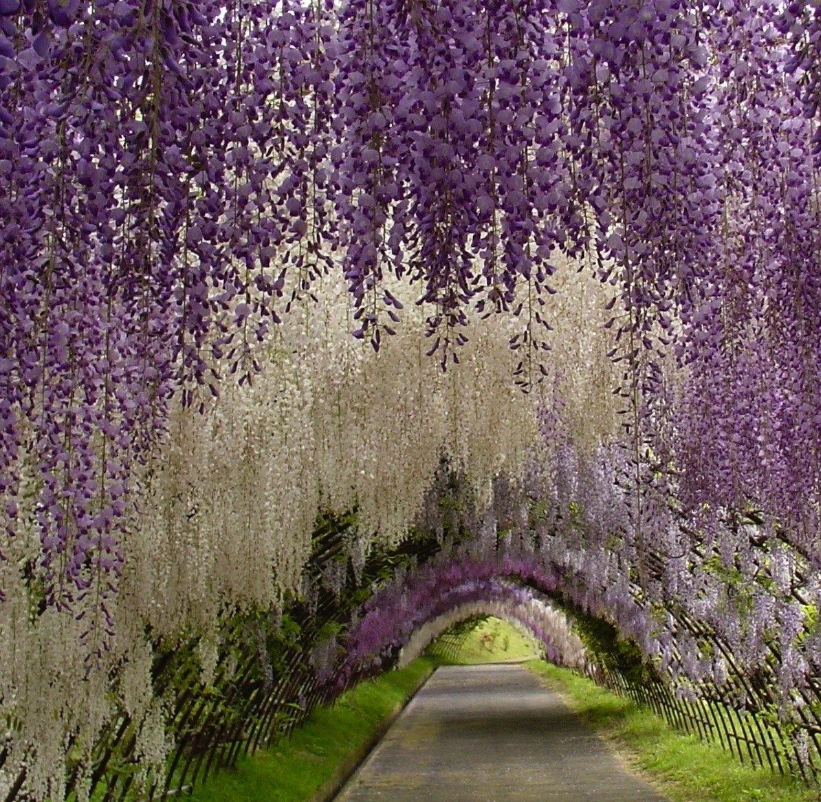 1 world knowledge kawachi fuji garden japan for Jardines kawachi fuji