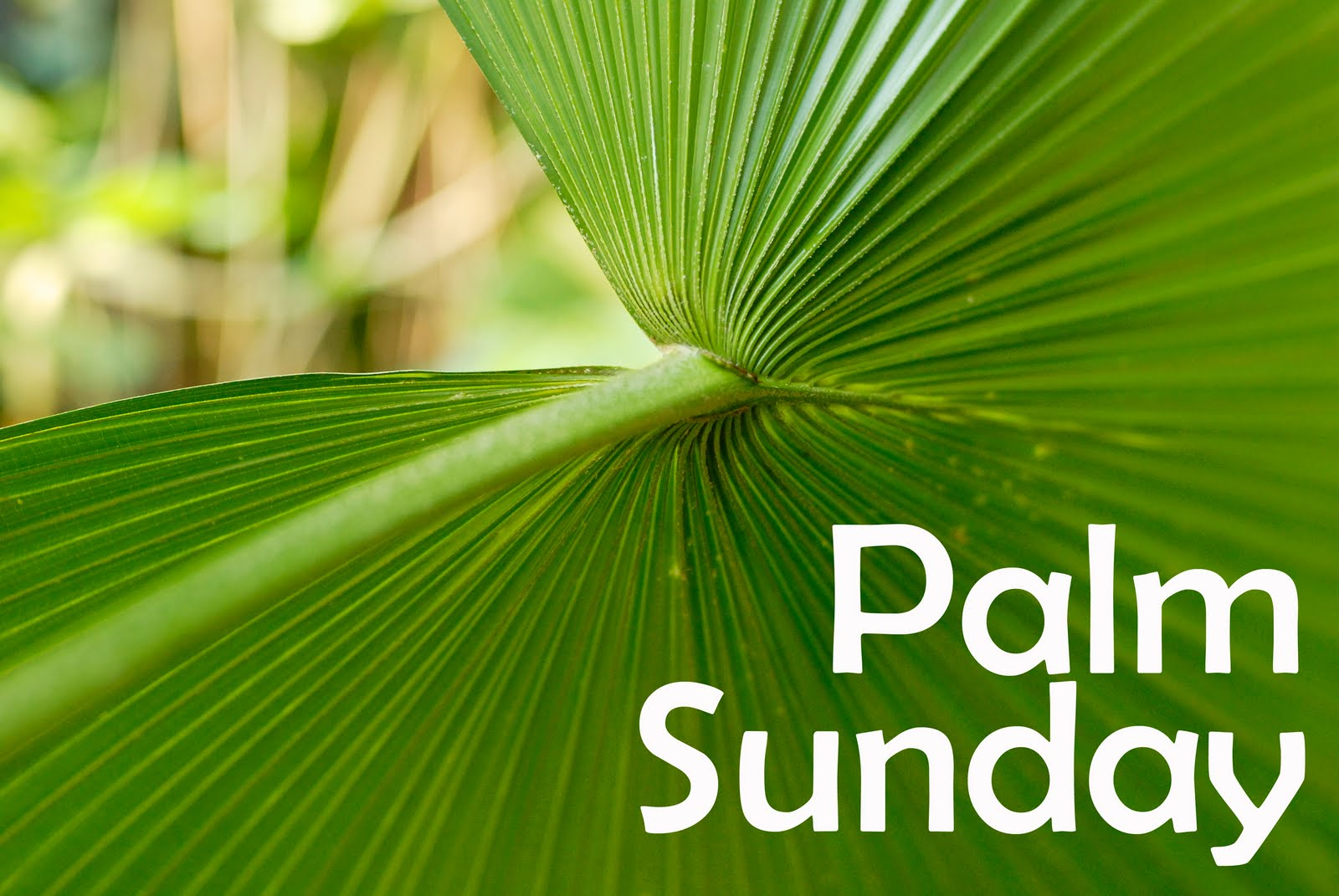 palm sunday What happened on palm sunday and how is palm sunday celebrated those questions, and more, are answered in this very brief, very basic primer on the pre-easter holiday.