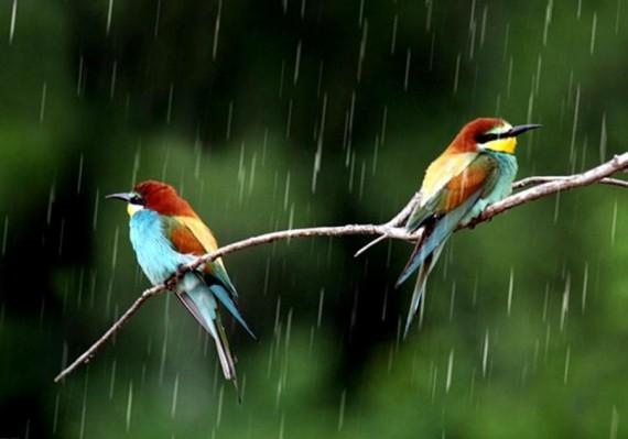 Two Birds In Monsoon Season Hd Wallpapers For Desktop