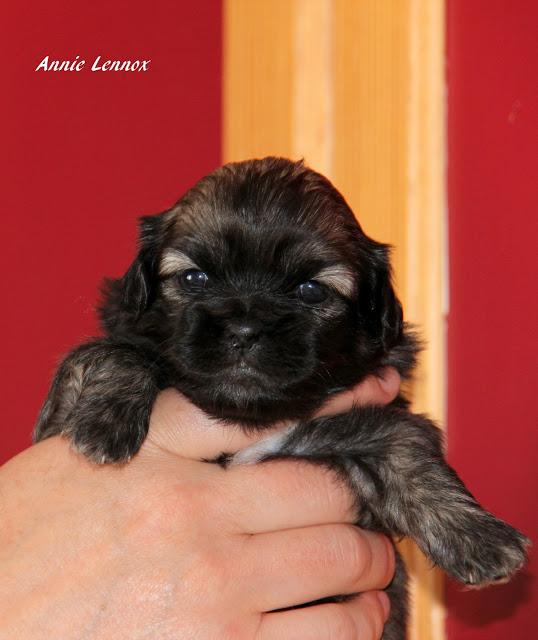 Tenk, dette er Annie, 3 uker ung