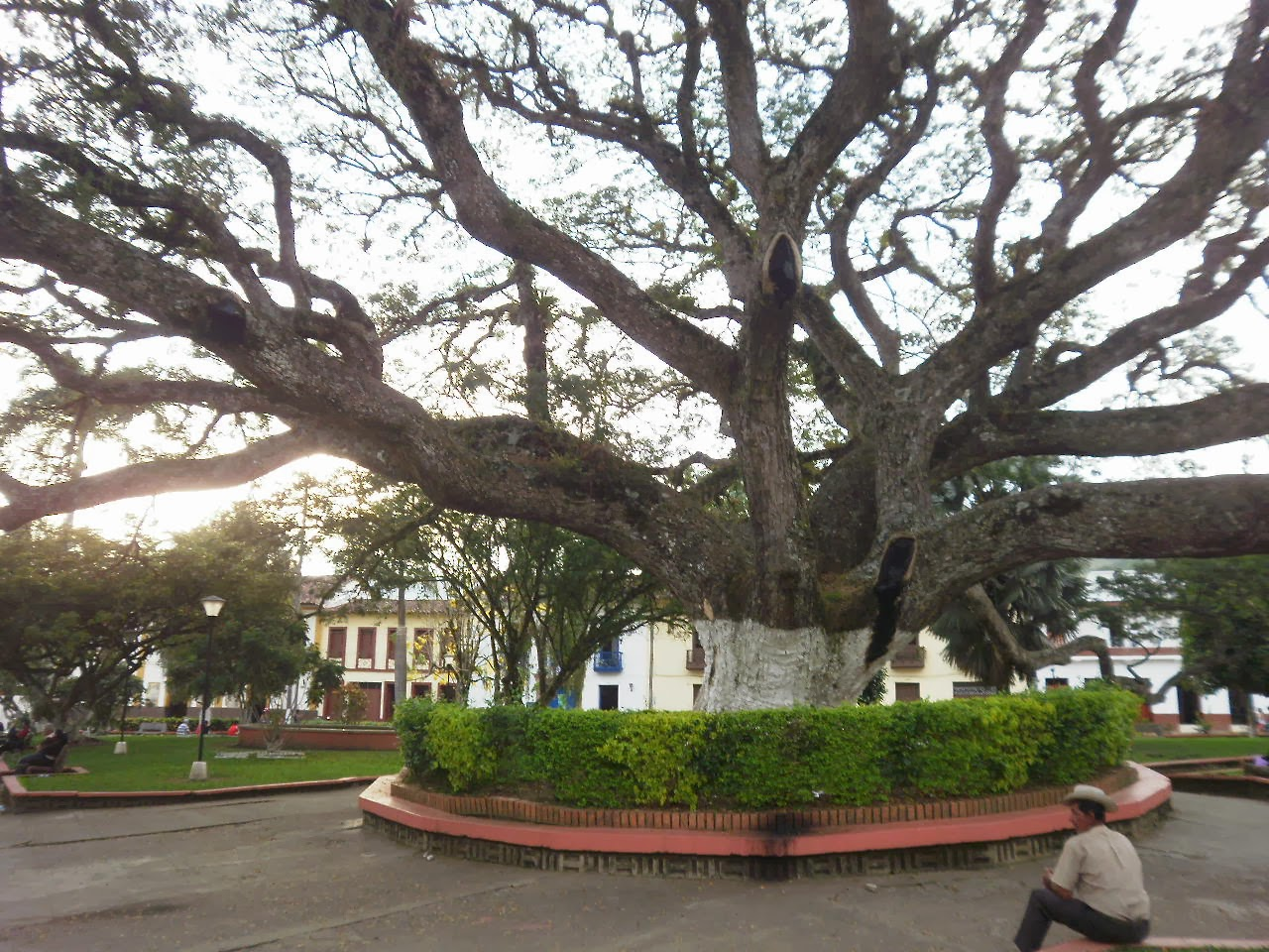 Resultado de imagen para charalá santander árbol