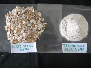 Kerabang telur atau cangkang telur bisa dimanfaatkan untuk campuran pakan ayam
