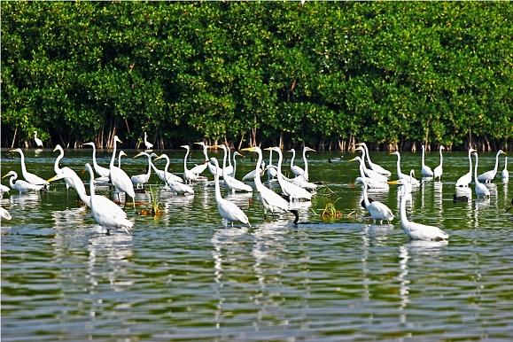 Visita el Estero Palo Verde