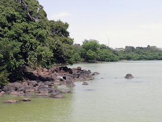 Litoral biotope lake tana
