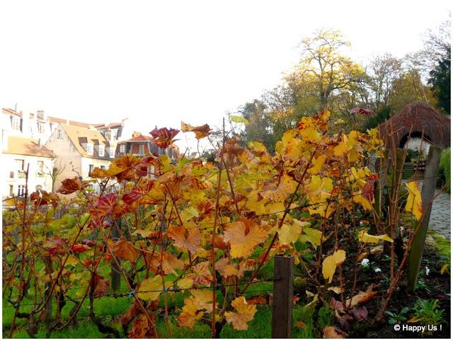 Montmartre - Vignes