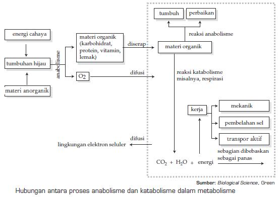 Keterkaitan Metabolisme Karbohidrat, Lemak, dan Protein