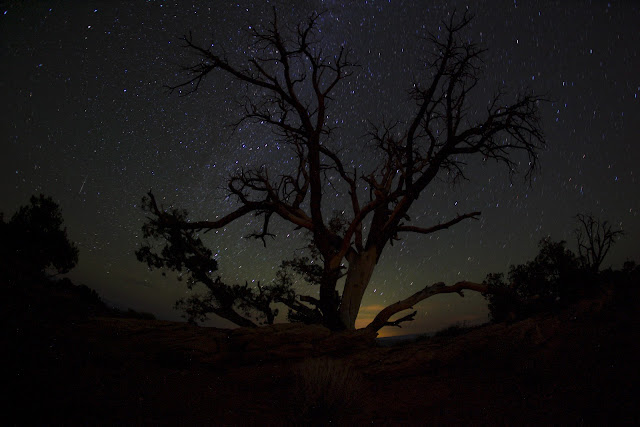 A sky full of stars and a cool tree at night in the Devil's Garden campground at Arches National Park.