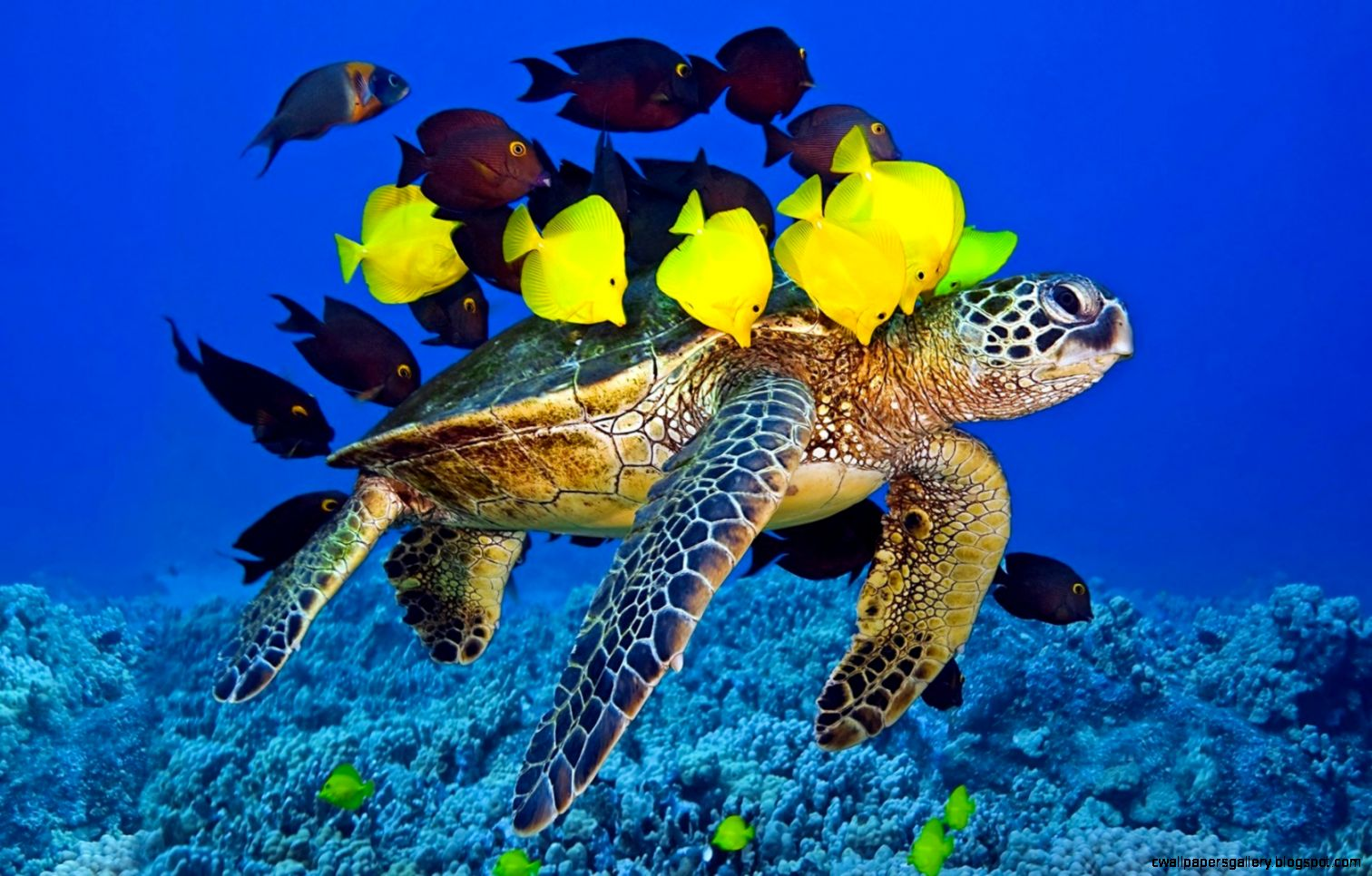Download Turtle Yellow Fish Underwater Ocean Awesome Wallpaper
