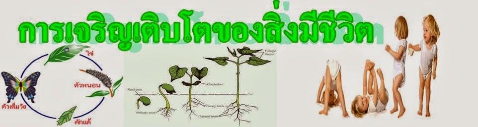 การเจริญเติบโตของสิ่งมีชีวิต