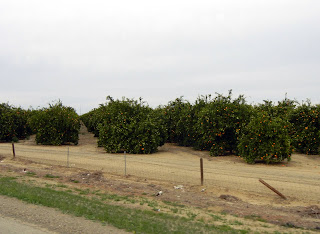 Orange groves off of I-5