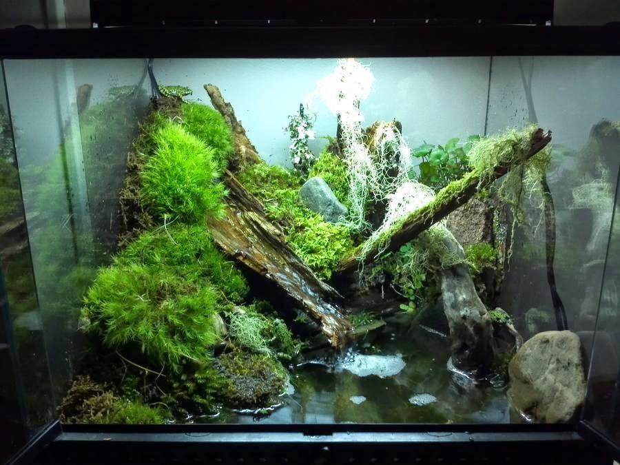 Живой камень для аквариума aquazoosu