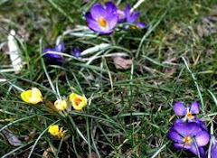 Idzie wiosna ???