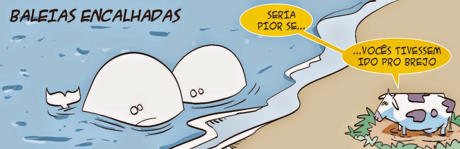 Seri: Baleias Encalhadas / Beached Whales.