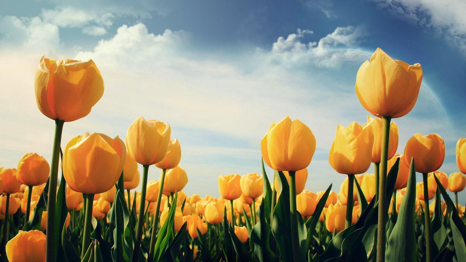 40 beautiful flowers desktop wallpapers - 1 ~ amazing world gallery