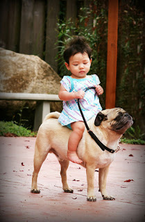 Gambar lucu, foto lucu diman anak bayi perempuan menunggangi anjing ...