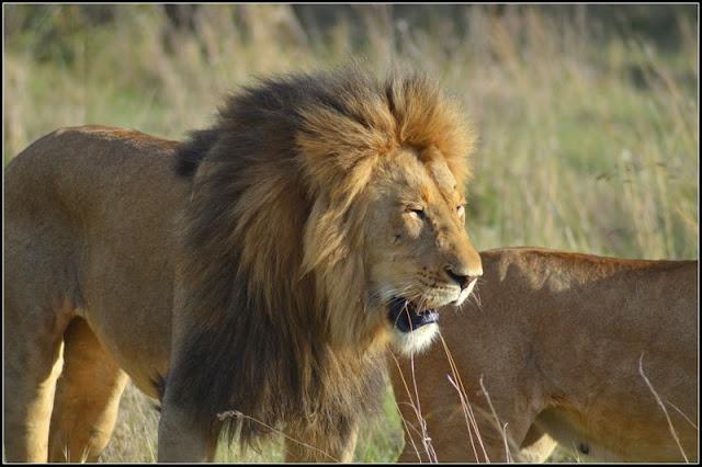 far and wild safaris blog  december 2013