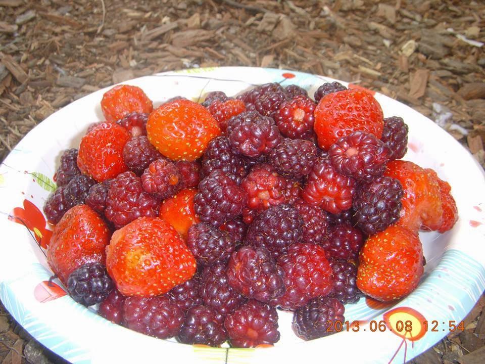 ∞ Berries ∞