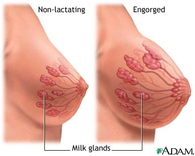 How to Block Breast Cancers Estrogen-Producing Enzymes