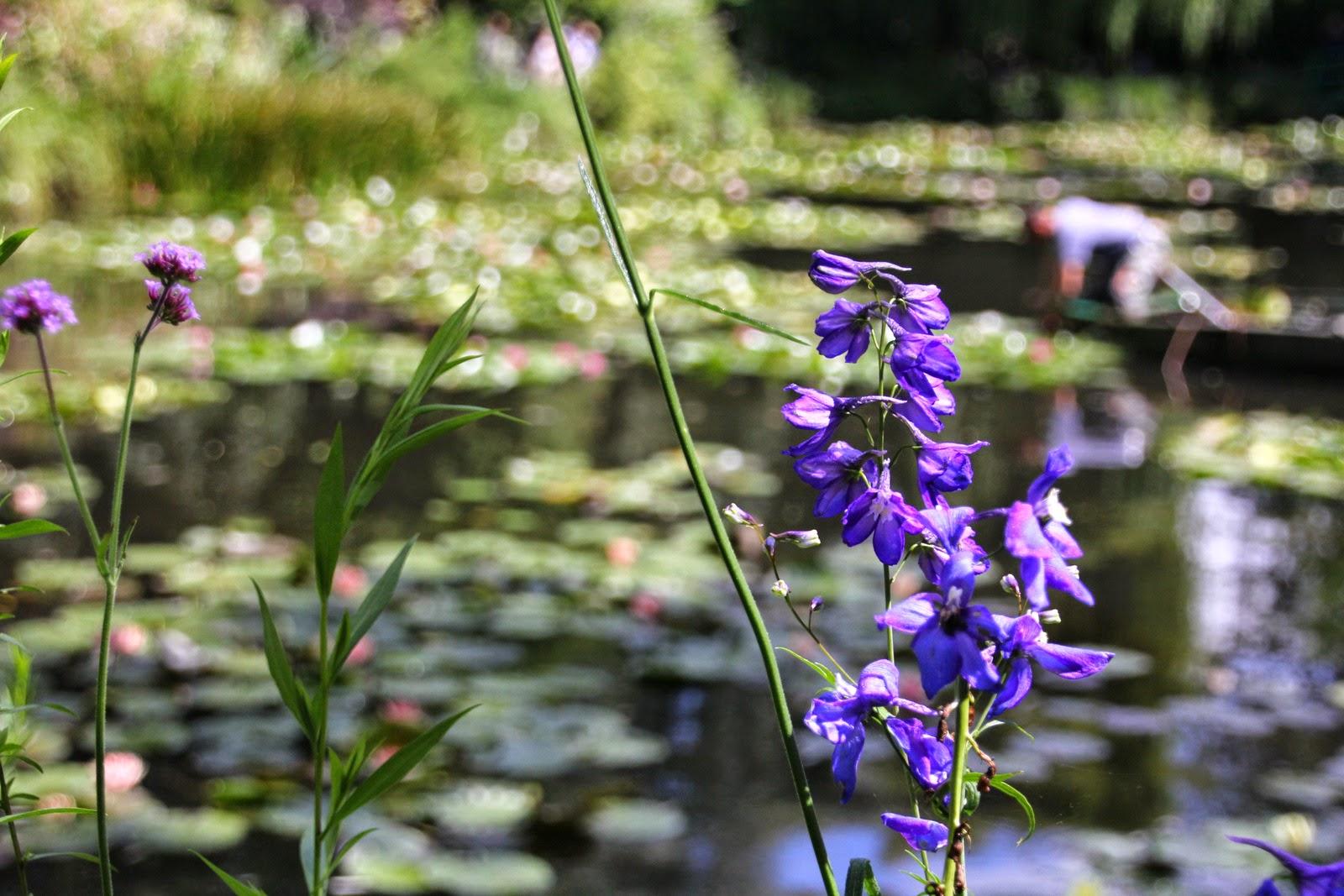Jardins des Nymphéas - Claude Monet