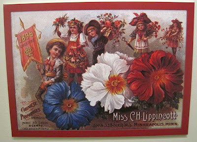 Litho of red white and blue primulas
