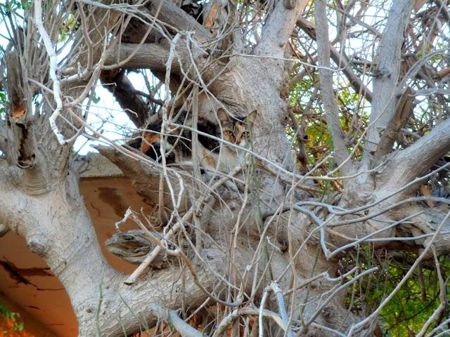 Hidden Cat on the Tree