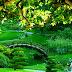 Beautiful Park images photos