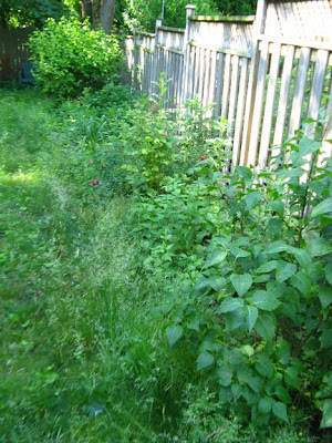 garden bed cleanup before by paul jung organic and ecological gardening services toronto