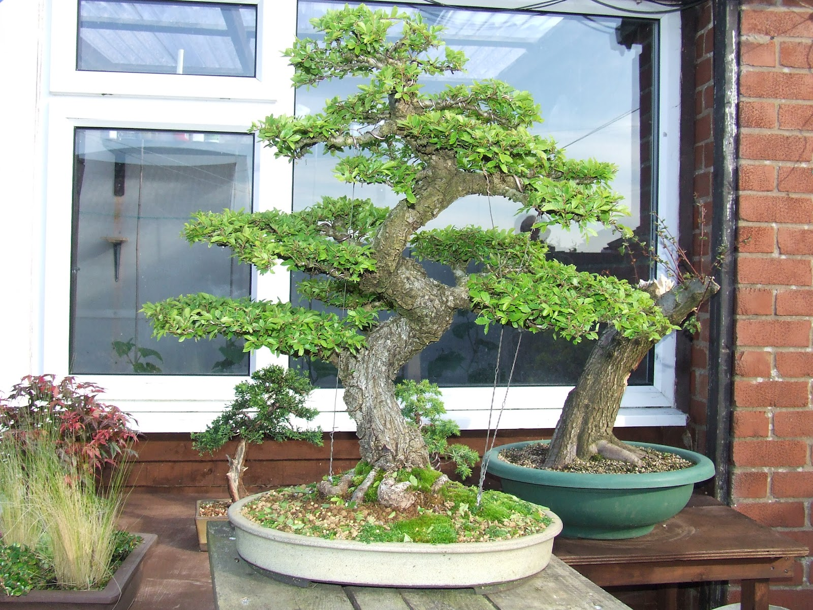 Ronin Bonsai Natter Night 25th June