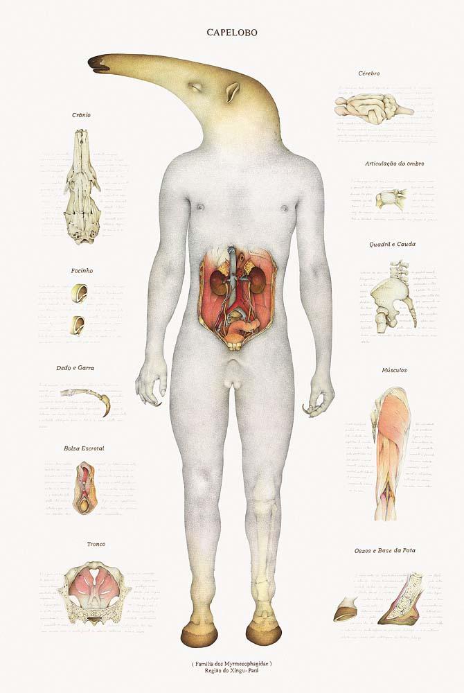 LA CIENCIA DE LA VIDA: Anatomía interna de una sirena y otros críptidos