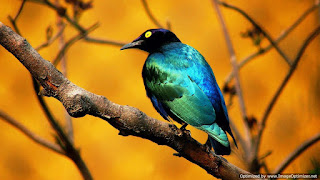 birds hd Wallpapers without watermarks.jpg
