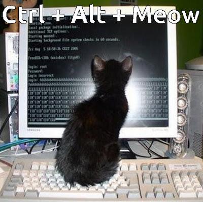 cat on keyboard funny meme