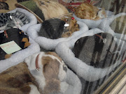 ¿Peluches hiperreales de cachorros de perros y gatos. Esto sí que da miedo