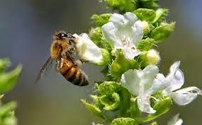 Λουλούδια- Επικονίαση-Καρποί-Σπόροι