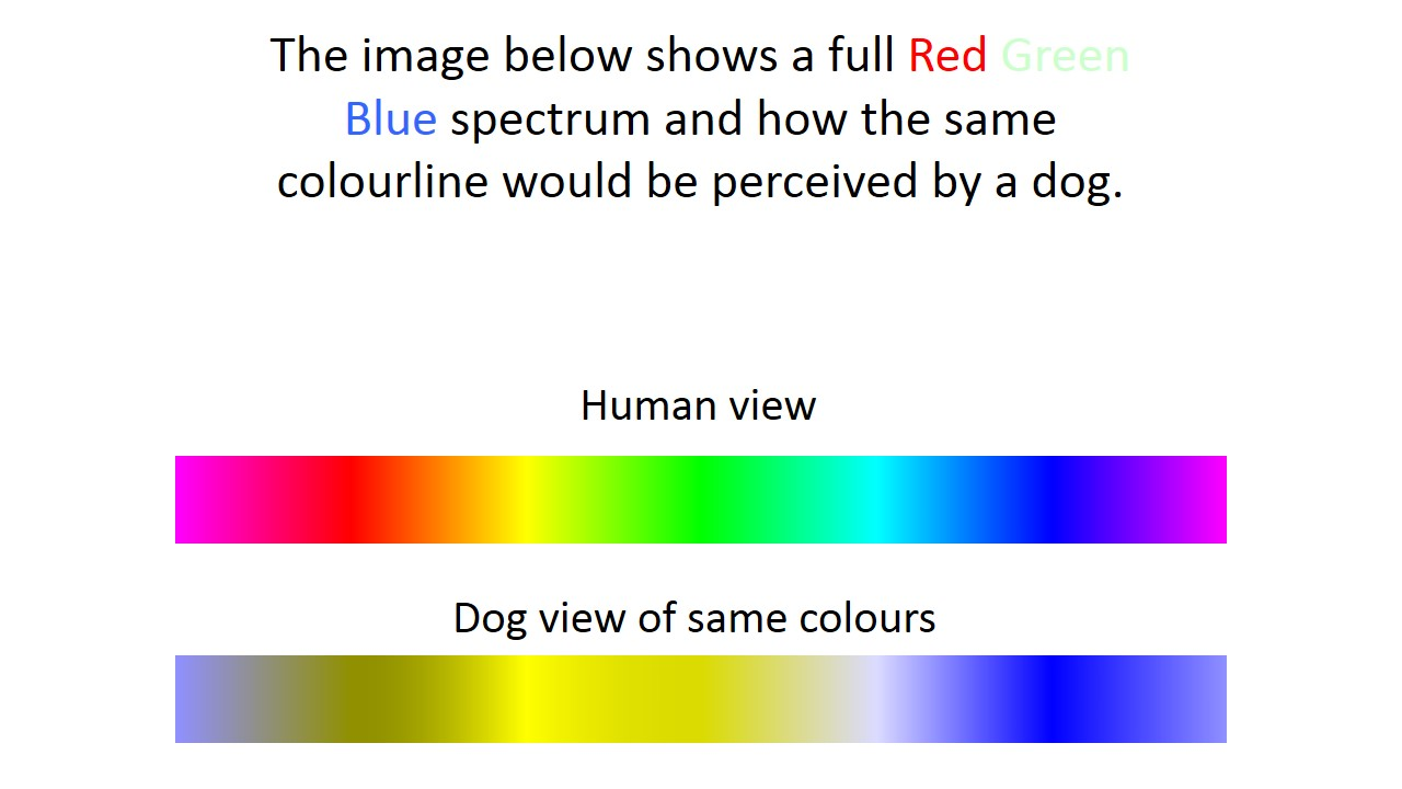 Dog vision vision in companion animals
