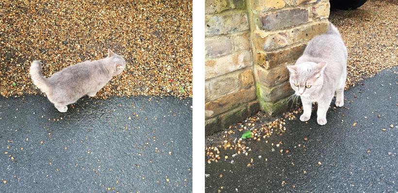 Neighbour's cat!