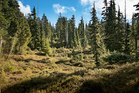 Sun blasting through the trees, Hiking to Mount Phillips Vancouver Island