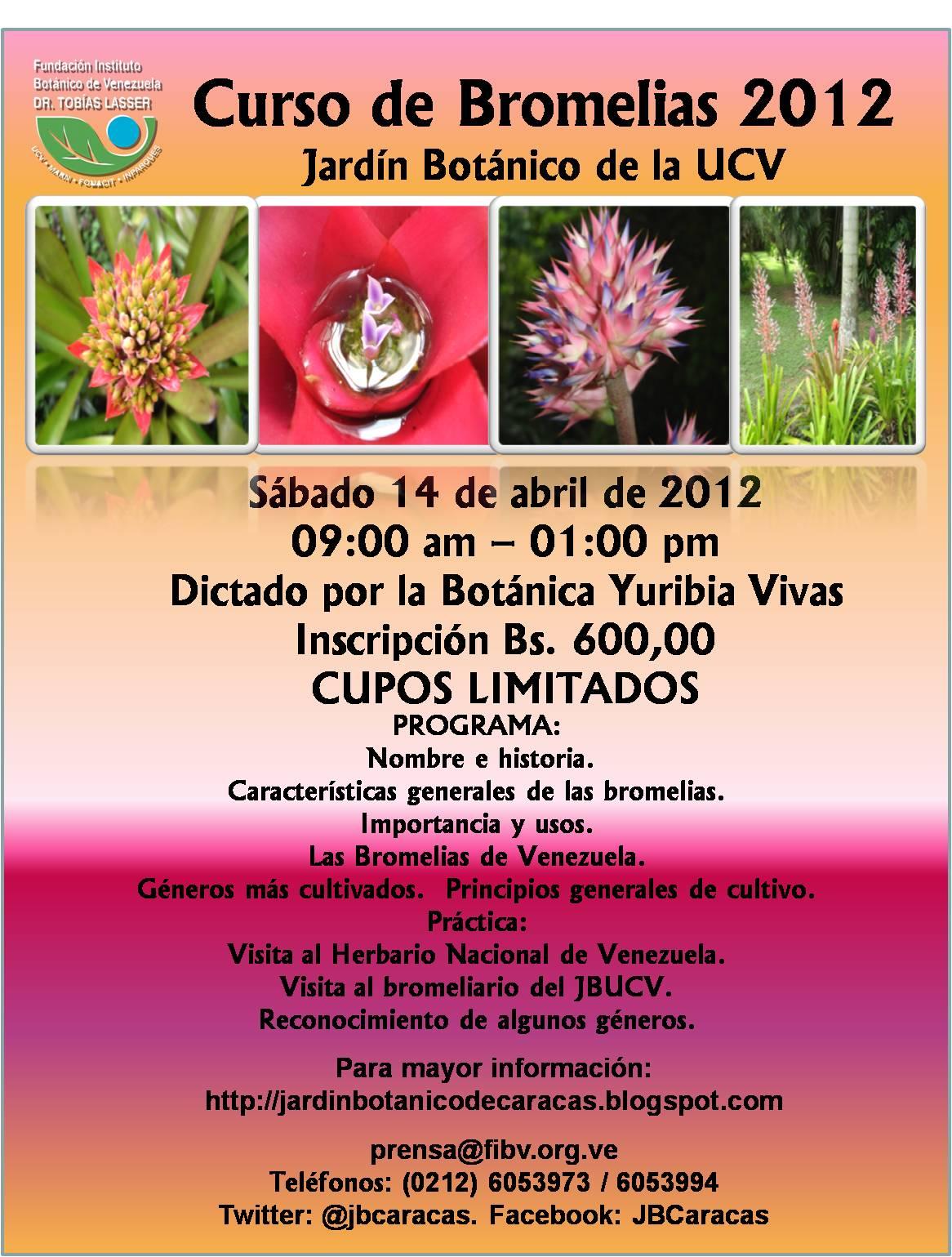 Bot nica en venezuela curso de bromelias en el jard n for Jardin botanico cursos